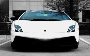 Lamborghini, Gaillarde, white, Lamborghini