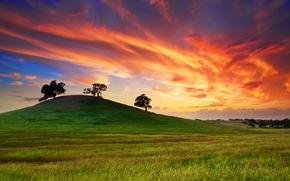 Stati Uniti d'America, California, tramonto, primavera, Maggio, cielo, nuvole, campo, erba, alberi