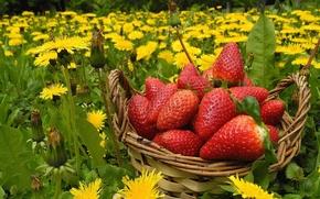strawberry, Berries, dandelions, Flowers, basket, meadow