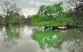 Дрезден, парк, озеро, деревья, весна