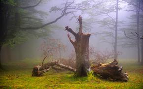 forest, fog, haze, summer, August, oskar zapirain
