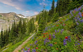 Пейзаж, США, Горы, wilderness pasayten, Трава, Тропа, Деревья, Ель