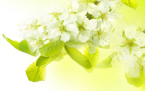 branch. Flowers, spring, apple