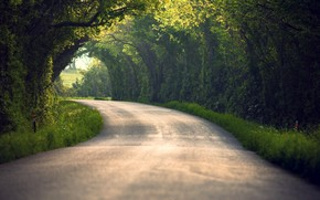 estate, natura, strada, fogliame, alberi