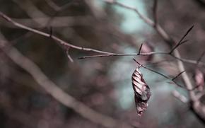 лист, макро, природа
