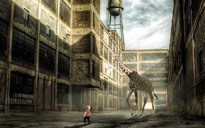 ситуация, жирафа, мальчик, монтаж