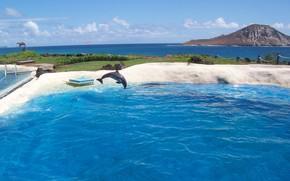 море, берег, дельфин