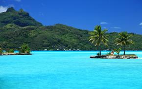 tropici, isola, palma