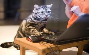Katze, Notizbuch, arbeiten