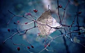 макро, лист, природа