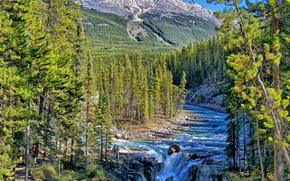 sunwapta falls, jasper national park, alberta, canada, sunwapta river, Джаспер, Альберта, Канада, река, горы, лес, водопад