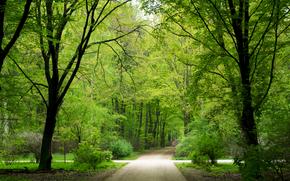 парк, лес, деревья, зелень, лето, Германия, Берлин, обои, hd, природа