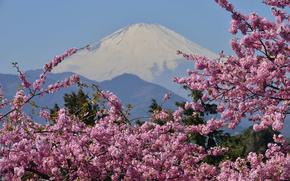mount fuji, japan, Фудзияма, гора, вулкан, сакура, цветение