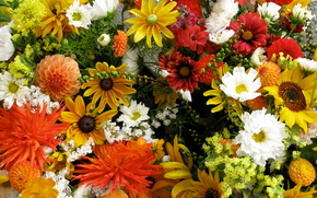 fiori, aiuola, natura