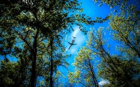 alberi, top, cielo, piano, paesaggio