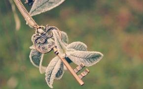 ключ, растение, ветка, иней, листья, цепочка, холод