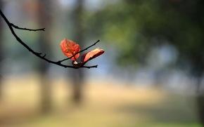 листья, макро, природа