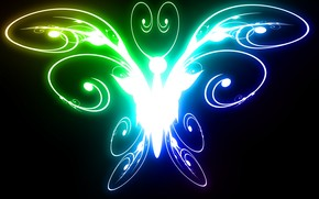 color, butterfly, bright, light, black
