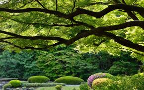 Shinjuku Gyoen giardino nazionale, tokyo, Giappone, Shinjuku Gyoen, Tokyo, Giappone, Shinjuku giardino Imperiale, parco, alberi