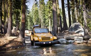 SUV, foresta, Camionetta