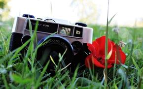 grama, cmera, papoula, planta, fundo, flor, flsculo, vermelho, Humor, lente, papel de parede