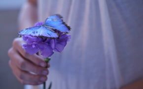 purple, wallpaper, Flowers, nice, floret, hand, background, girl, butterfly