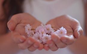 обои, нежный, руки, цветы, цветочки, фон, розовый