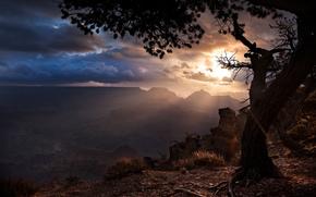лучи солнца, Гранд каньон, тучи, штат Аризона, дерево