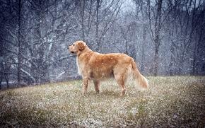 dog, Winter, field