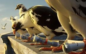 vo, Aves, pombo