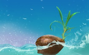 sea, coconut, heart, Art, leaves, sprout, Birds, water, nut