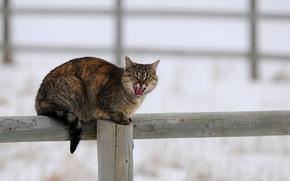 column, of wood, snow, cat, cat, fence, Winter