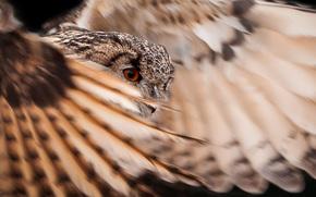 plumage, feathers, bird, Owl, wings