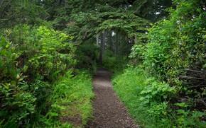 fort, arbres, Nature, piste, paysage