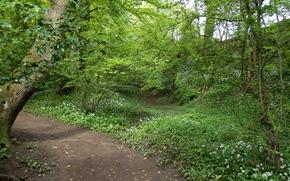 foresta, alberi, traccia, natura