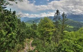 Untersberg, Salisburgo, Austria, Montagne, alberi, natura