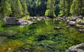 lago, pietre, foresta, alberi, natura