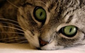 кошки, кошаки, макро
