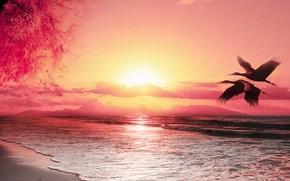 sunset, sea, The Cranes