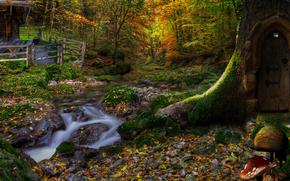 foresta, fiume, funghi, natura