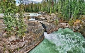 河, 山, 树, 景观