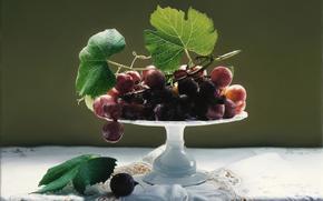 tablecloth, still life, svetvaza, Art, lace, vase, picture, Berries, leaves, grapes