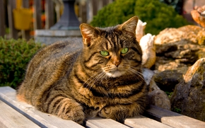 sitting, cat, bench, green, eyes, cat, shop, striped