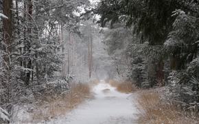dewollewei, foresta, inverno, strada, neve