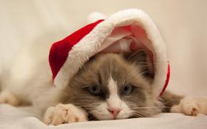 шапка, кошка, серый, голубые, белый, глаза, красная, новогодняя, кот