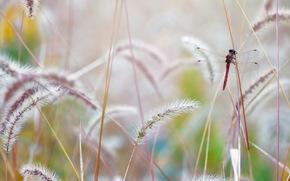nature, macro, grass