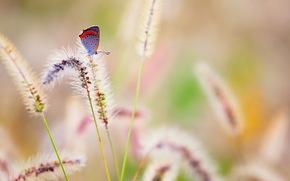 бабочка, природа, лето