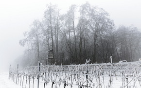giardino, Foschia, torre, inverno