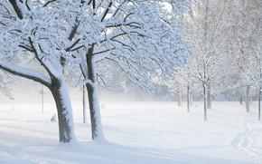 fog, Trees, snow, Winter