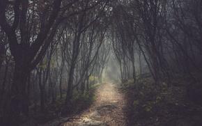 traccia, foresta, vicolo, sentiero, alberi, oscuramente